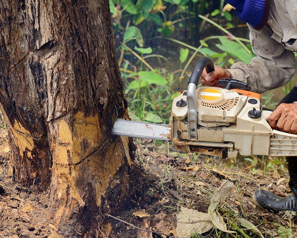 Tree Service Las Vegas - Tree Removal