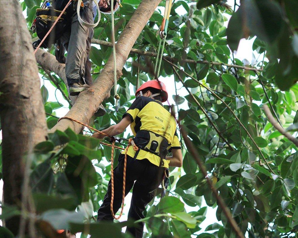 Tree Service Las Vegas - Emergency Tree Removal