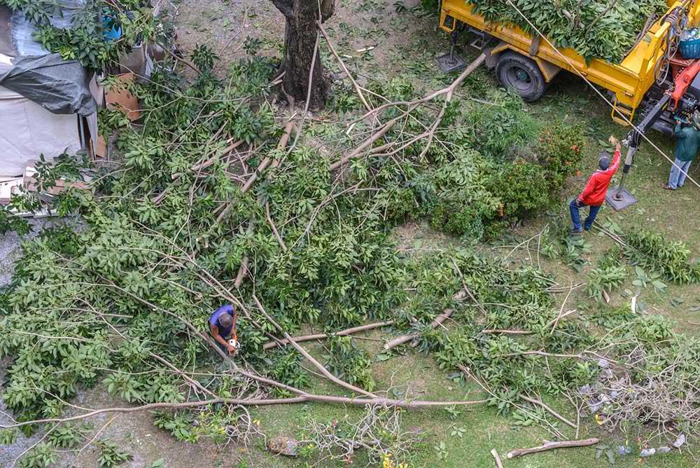 Tree Service Las Vegas - Tree Trimming